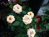 Blog2009_05170018